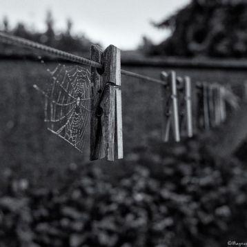 a7d3a119345fca8402fc7e79b6dc36ee--clotheslines-spooky-halloween