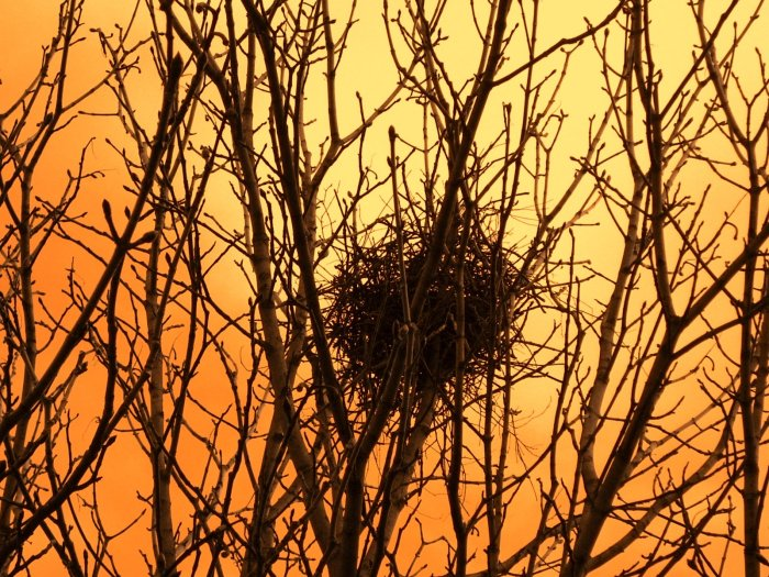 abandoned_nest_wallpaper_1_by_ivaceda